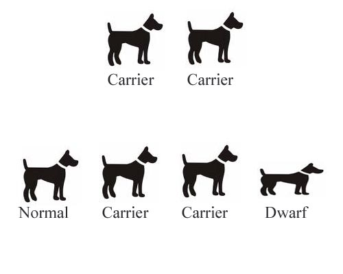Carrier to Carrier breeding