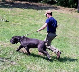 Achilles running2
