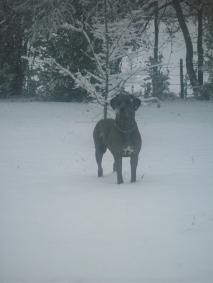 morrigan-snow31