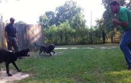 Dogs 026