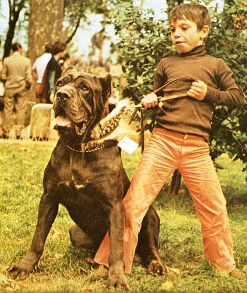 Как выглядели первые бульмастифы Italy-1970s