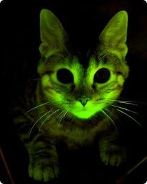glow-cat